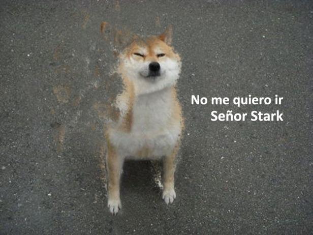dog-no-me-quiero-ir-sr-stark
