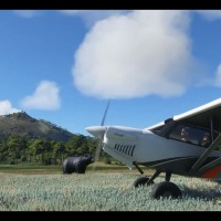 Microsoft Flight Simulator muestra la fauna animal en un nuevo video